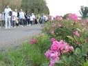 caminhada das rosas.JPG